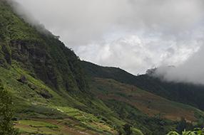 Teeplantagen für Ceylontee